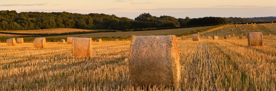 Hawkins Ryan has vast experience in the agricultural sector. For almost 90 years, landowners and fenland farmers have relied on our expertise to guide them through every legal aspect of their business.
